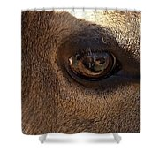 Elk Eye Close Up Shower Curtain