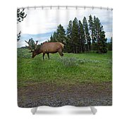 Elk Feeding Shower Curtain