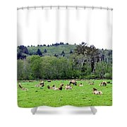 Elk Herd Shower Curtain