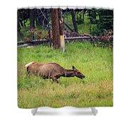 Elk In The Field Shower Curtain