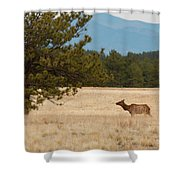 Elk In The Fossil Beds Shower Curtain