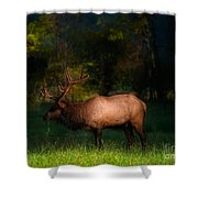 Elk In The Smokies. Shower Curtain by Itai Minovitz
