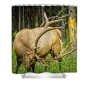 Elk In The Woods Shower Curtain
