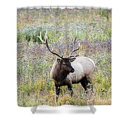 Elk In Wildflowers #1 Shower Curtain
