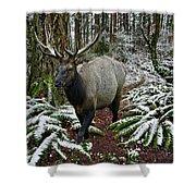 Elk In Winter Shower Curtain