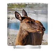Elk In Yellowstone Shower Curtain