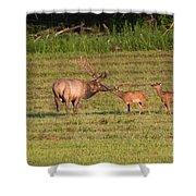 Elk Kisses Shower Curtain by Jemmy Archer