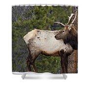 Elk Looking Back Shower Curtain