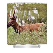 Elk Of Jasper... Shower Curtain