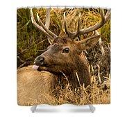 Elk Raspberry For Tom Shower Curtain