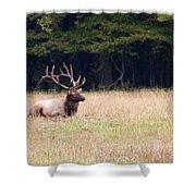 Elk Sitting Down Shower Curtain