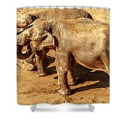 Ellephants Shower Curtain