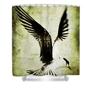 Emancipate Shower Curtain