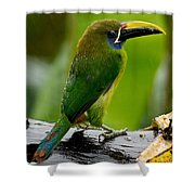 Emerald Toucanet In The Rain Shower Curtain