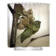 Emerging - Cicada 2 Shower Curtain