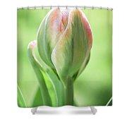 Emerging Ice Cream Tulip Shower Curtain