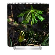 Emerging Mayapples Buffalo National River Shower Curtain
