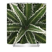 Emerging Palm Shower Curtain