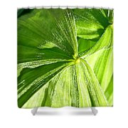 Emerging Plants Shower Curtain