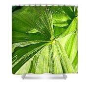 Emerging Plants Shower Curtain