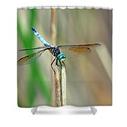 Emperor Dragonfly  Shower Curtain