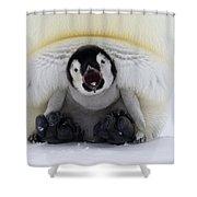 Emperor Penguin Aptenodytes Forsteri Shower Curtain by Rob Reijnen