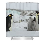 Emperor Penguin Landscape Shower Curtain