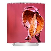 Empty Seed Pod  Shower Curtain
