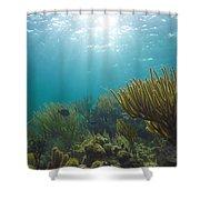 Enchanted Seas Shower Curtain