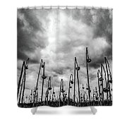 End Of Season Sunflowers Shower Curtain