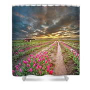 Endless Tulip Field Shower Curtain