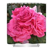Energizing Pink Roses Shower Curtain
