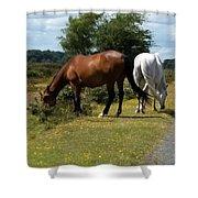 England - Wild Horses Shower Curtain