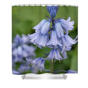 English Bluebell Shower Curtain