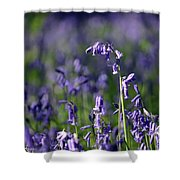 English Bluebells In Bloom Shower Curtain