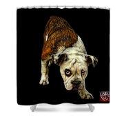 English Bulldog Dog Art - 1368 - Bb Shower Curtain