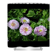English Daisies Shower Curtain
