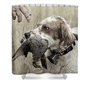 English Setter And Hungarian Partridge - D003092a Shower Curtain by Daniel Dempster