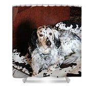 English Setter Lay Shower Curtain