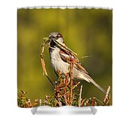 English Sparrow Bringing Material To Build Nest Shower Curtain