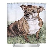 English Staffordshire Terrier Shower Curtain