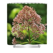 Epargyreus Clarus On Joe-pyed Weed Shower Curtain