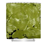 Epiphnay 1 Shower Curtain