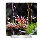 Epiphytic Plants Shower Curtain