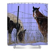 Equestrian Beauties Shower Curtain