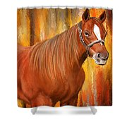 Equine Prestige - Horse Paintings Shower Curtain