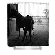 Equus Sapien IIi Shower Curtain