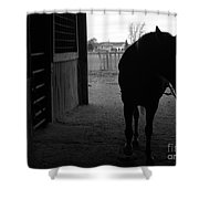 Equus Sapien Vi Shower Curtain