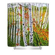 Erin's Birch Trees Shower Curtain