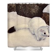 Ermine In Winter Shower Curtain